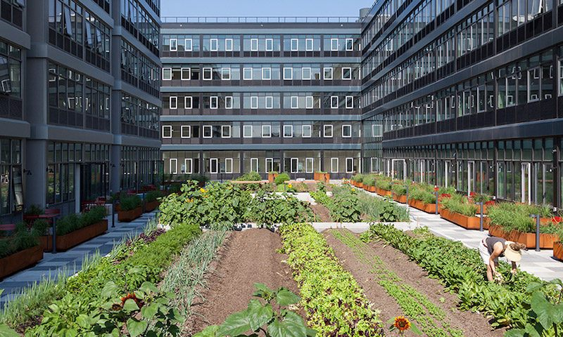 Urban Farm in NYC